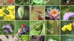 Birleşmiş Milletler: 150 ülke, biyoçeşitlilik konusunda verdikleri sözün hiçbirini tutmadı