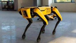 Boston Dynamics'in robot köpeği Spot Avrupa'da satışa çıktı
